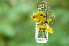 Bridal цветки ливня Стоковые Изображения RF