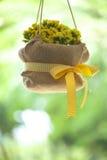 Bridal цветки ливня Стоковое Изображение RF