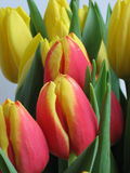 bridal цветки Стоковая Фотография