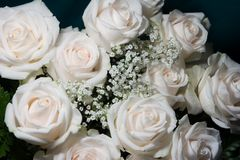 Bridal bouquet. Of white roses Royalty Free Stock Image