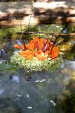 Bridal Bouquet of Flowers. Floating on water Stock Photos