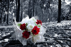 Bridal bouquet Red and White Roses. In the forest Black and White tone Royalty Free Stock Photos