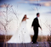 Bridal couple defocused foreground with nature. Stock Photos