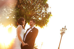 Bridal couple embracing in sunlight. Beautiful bridal couple embracing in sunlight Royalty Free Stock Photography