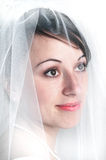 Bridal Portrait Veil Beautiful Woman royalty free stock photography
