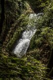 Bridal przesłona Spada przez drzew, Oregon, obraz royalty free