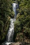 Bridal przesłona Spada przez drzew, Oregon, zdjęcia stock