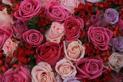 Bridal roses in pink and purple Royalty Free Stock Photos