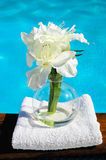 Bridal and towel. White bridal in vase near pool Royalty Free Stock Image