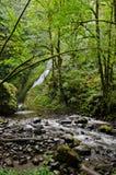 Bridal Veil Falls in Oregon Stock Photography