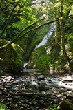 Bridal Veil Falls in Oregon Stock Images