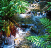 Bridal Veil Falls Stream 2 Stock Images