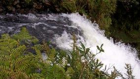 Bridal Veil Waterfall Waikato New Zealand stock video footage