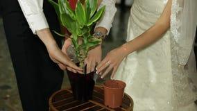 Bridal Wedding Tradition stock footage
