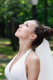 The bride. The beautiful bride in a white wedding dress stock images