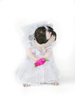 The bride. A boston terrier bride looking dejected Royalty Free Stock Photography