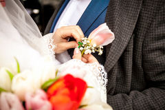 Bride adjusting boutonniere on grooms jacket Royalty Free Stock Images
