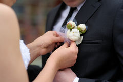 Bride adjusting groom's boutonniere Royalty Free Stock Photography