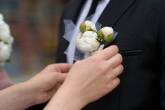 Bride adjusting groom's boutonniere Royalty Free Stock Images