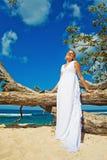Bride on the beach. Wedding near tree on a beach Royalty Free Stock Image
