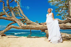 Bride on the beach. Wedding near tree on a beach Stock Image