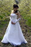 Bride. Beautiful bride in a white dress Stock Images