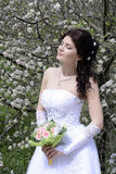 Bride. Beautiful bride in a white dress Stock Photos