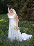 Bride in bluebonnet field. A woman with dark hair in a wedding gown holds a bouquet Royalty Free Stock Photos
