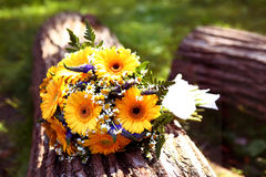 Bride Bouquet Lay On Log Summer Outdoor Photo Royalty Free Stock Image