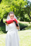 Bride with boxing gloves punching in park Royalty Free Stock Photography