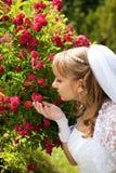 Bride beside a bush of roses Stock Photos