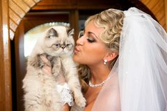 The bride with a cat Stock Image