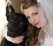 Bride with a dog. The bride with the big black dog Royalty Free Stock Images