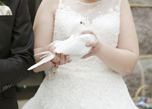 Bride with dove in hand Royalty Free Stock Images