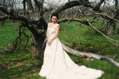 The bride in a dress with a trainin a garden Stock Photo