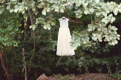Bride dress in a tree Stock Image