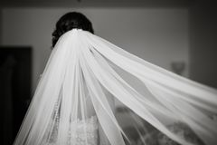 Bride with white veil, black and white portrait of a woman from the back Stock Image