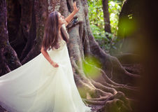 Bride in fairy forest Stock Photos