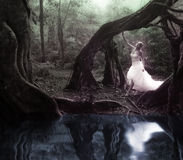 Bride in fairy forest Stock Images