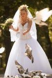 Bride feeding doves Stock Photos