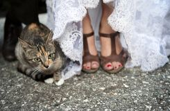 Bride feet and cat Royalty Free Stock Photography