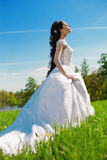 Bride on a field in the sunshine Royalty Free Stock Photography