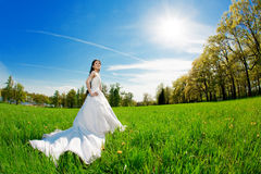 Bride on a field in the sunshine Stock Images