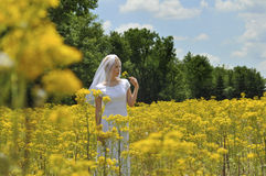 Bride in a flowers field Royalty Free Stock Photography