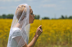 Bride in a flowers field Stock Photo