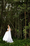 Bride Forest. A bride walking in the forest Royalty Free Stock Photos
