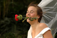 Bride funny. A beautiful young brunette caucasian bride head portrait with funny and joking expression in her face holding a red rose with her white teeth in the royalty free stock photo