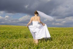 The bride goes to field Stock Images