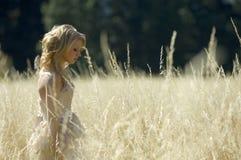 Bride in golden field Stock Images