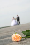 Bride and groom. Looking to camera Royalty Free Stock Images